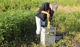 Controlled Drainage Practices Boost Yields, Stem Nutrient Runoff